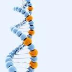Eldan DNA