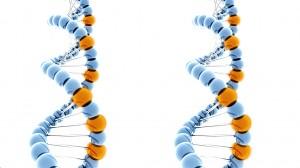 Eldan DNA double