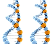 Mutagenesis & Cloning