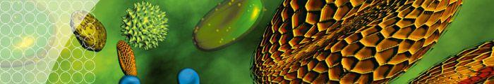 R-Biopharm- Allergy diag banner